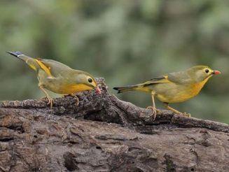 Manali Wildlife Sanctuary