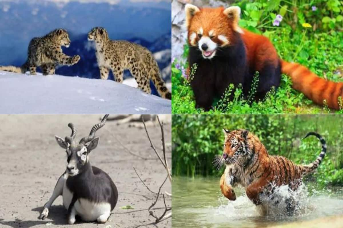 10 Endangered Animals in India That You Should See Before They Vanish!