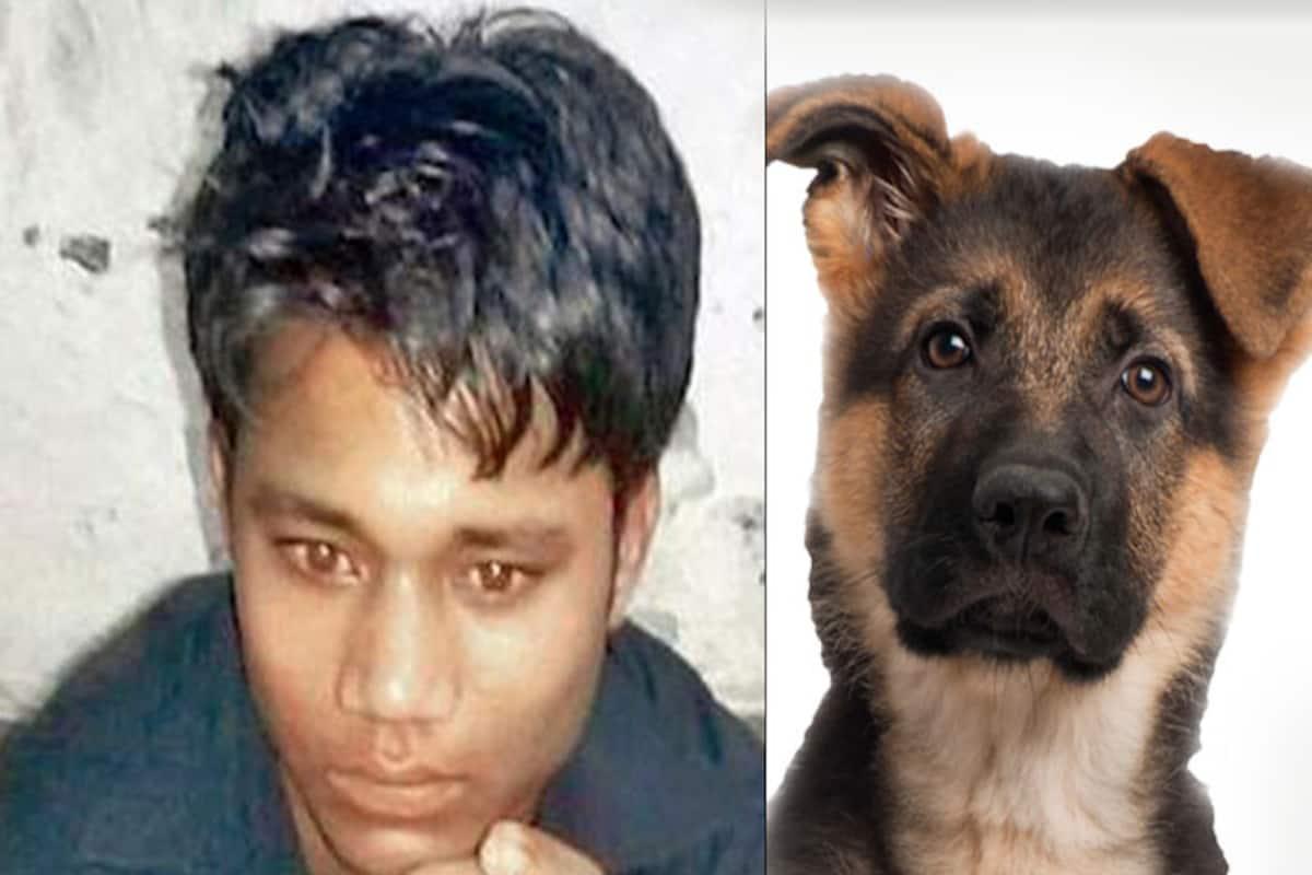 Dog sex with Dog Sex