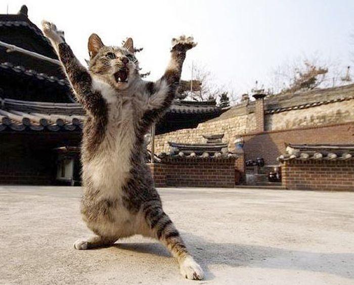 Image Credit: www.bandofcats.com