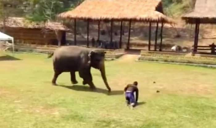 The video of Elephant rushing to save her caretaker is inspiring!