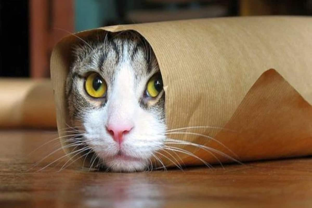 19 Funny Cat Pictures That Will Instantly Cheer You Up India Com