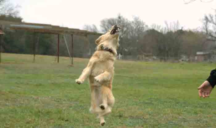 Dog jumping to catch food is mesmerizing in slow motion [Video]