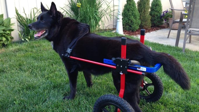 Nicky Wheelchair