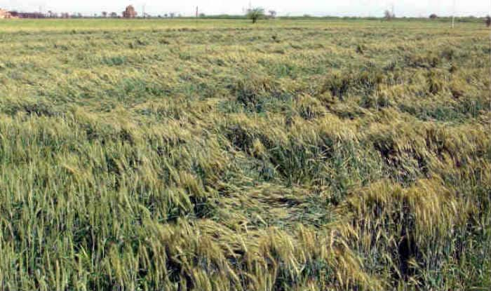 Government to soon buy Drone technology to assess crop damage