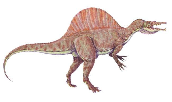New dinosaur with bow-shaped hip bone identified in China