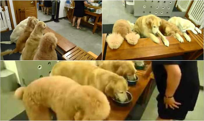 These dogs pray a prayer of blessing & thanks before their meal