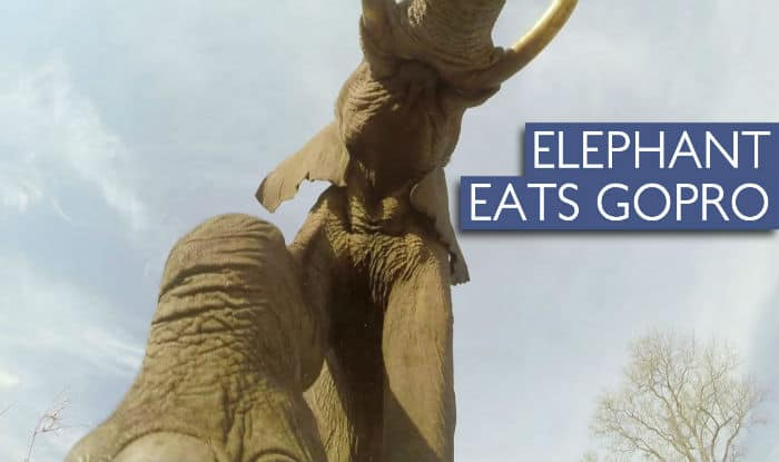Elephant tries to eat GoPro camera: Watch amazing video footage