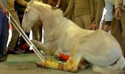 BJP defends MLA who attacked police horse Shaktiman; says he was not present at the scene! (Watch Video)