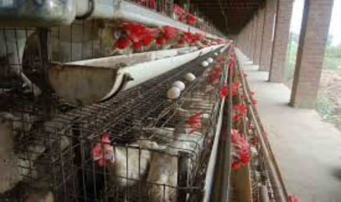 Kuwait imposes ban on import of Indian poultry products