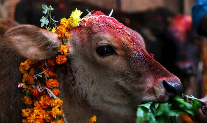 With NIPR policy, is Narendra Modi government moving towards patenting 'cow urine'?