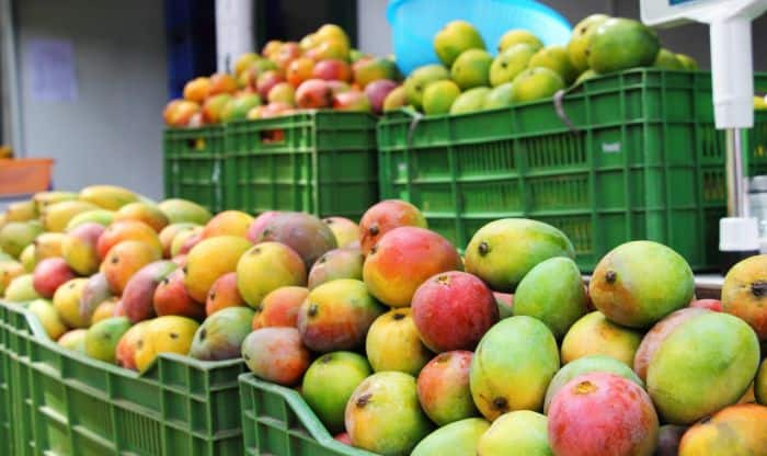 Sugar-free mangoes anyone? Scientists creating sugar-free mangoes in India for diabetes patients!