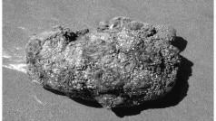 Watch video of living rock which can be eaten | OMG!!! दुनियां में मौजूद है जिंदा पत्थर, काटो तो निकलता है खून देखें वीडियो