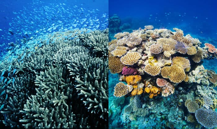 Australia's Great Barrier Reef & 6 other natural wonders to travel right now before they are dead
