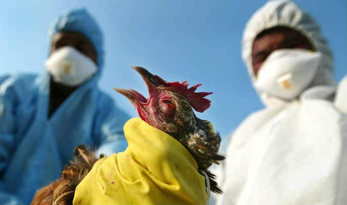 Bird Flu: Delhi Government assures regular monitoring, says don't be scared
