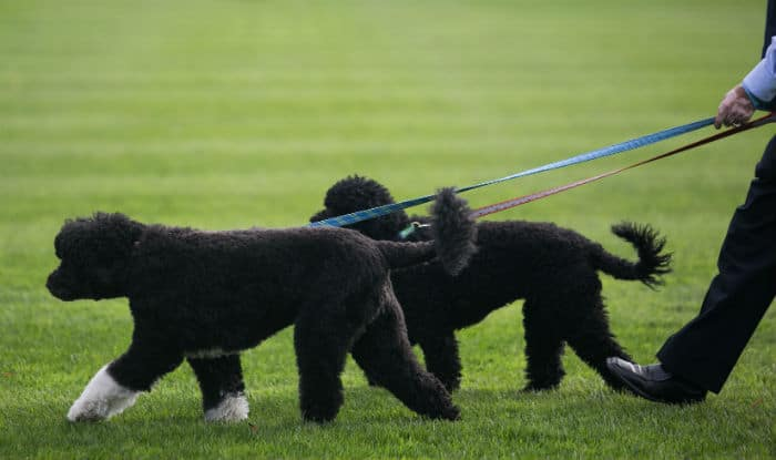 Barack Obama's dog bites White House guest in the face