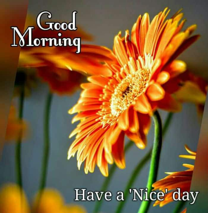 Good morning WhatsApp message