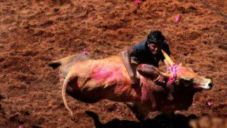 Madurai District Administration Makes Aadhaar Mandatory For Bull Tamers to Participate in Jallikattu Celebrations