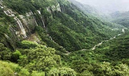 Top 10 Forests of India That Every Nature Lover Must Visit at Least Once