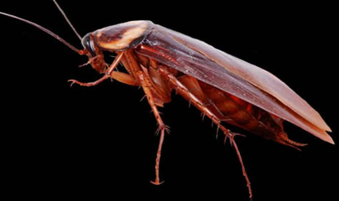 Bizarre: Live cockroach removed from a woman's skull by doctors at Chennai's Stanley Medical College and Hospital