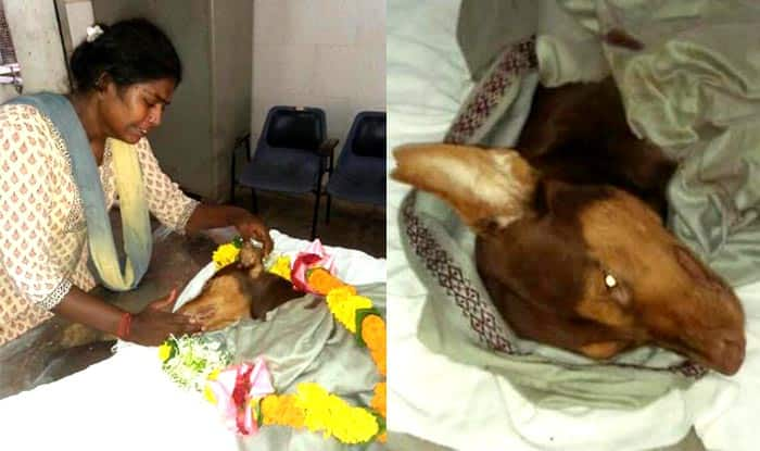 Stray dog dies saving Mumbai woman's life who adopted it