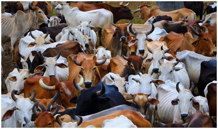 Rajasthan: Cow vigilantes turn audacious, attack Tamil Nadu