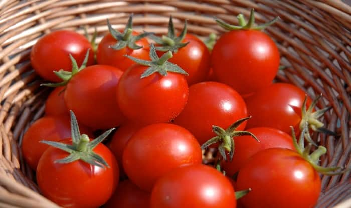 Shortage of Supply Soars Tomato Prices to Over Rs 90 Per kg in 17 Major Cities