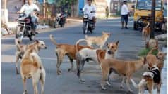Delhi Police Investigates Death of Four Dogs After Receiving Complaint