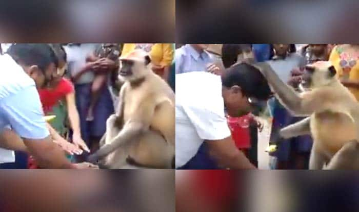 This Monkey Is The New Godman In Town, Better Trust Him Than Babas like Gurmeet Ram Rahim