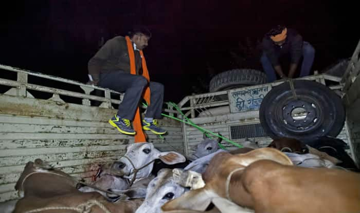 Cow Vigilantes Attacked in Maharashtra's Ahmednagar, 20 Detained