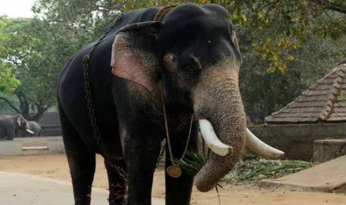 Man in Odisha Trampled to Death by Elephant While Taking Selfie