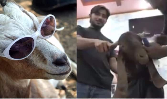 Eid al Adha/Bakra Eid/Eid ul Zuha