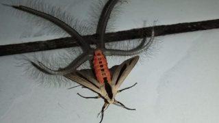 VIDEO: Freaky looking bug Viral on Social media | VIDEO: सोशल मीडिया पर वायरल हो रहे 'एलियन' जैसे दिखने वाले कीड़े की सच्चाई