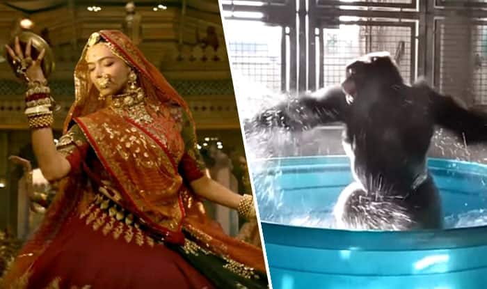 Padmavati's Song Ghoomar's Gorilla Dance Version is the Funniest Thing You Will See on the Internet Today