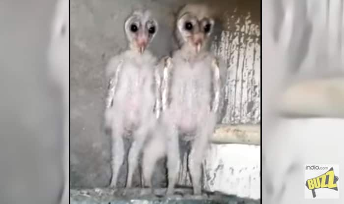 Barn Owls Mistaken for Aliens in Vizag in This Viral Video