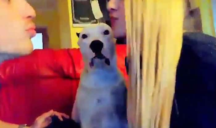 Hilarious Video: Jealous Pet Dog Always Interrupts Owner When He Kisses His Girlfriend