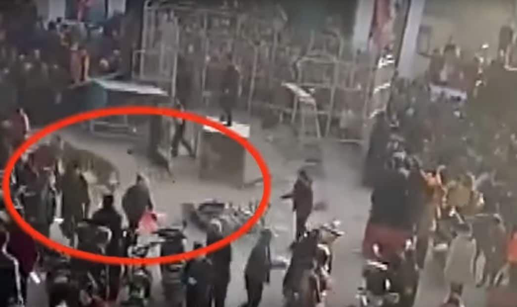 Shocking video: Tiger Breaks Circus Cage, Injures Two Children