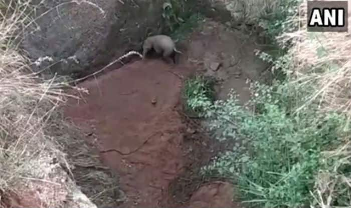 Baby Elephant Rescued From 20 Feet Ditch in Tamil Nadu, Watch Villagers and Forest Officials Pull it Out