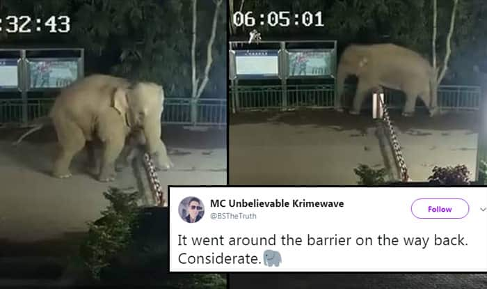 Polite Elephant Goes for a Nighttime Stroll, Crosses China-Laos Border Twice, Video Goes Viral