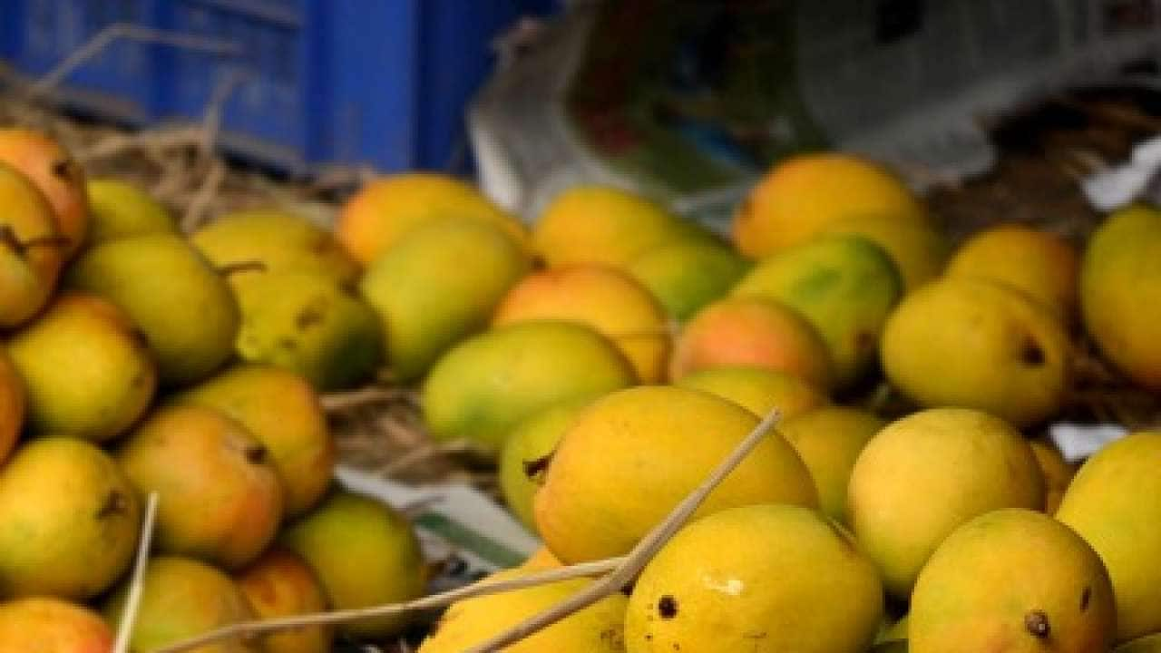 234079 mangoes 1 020512