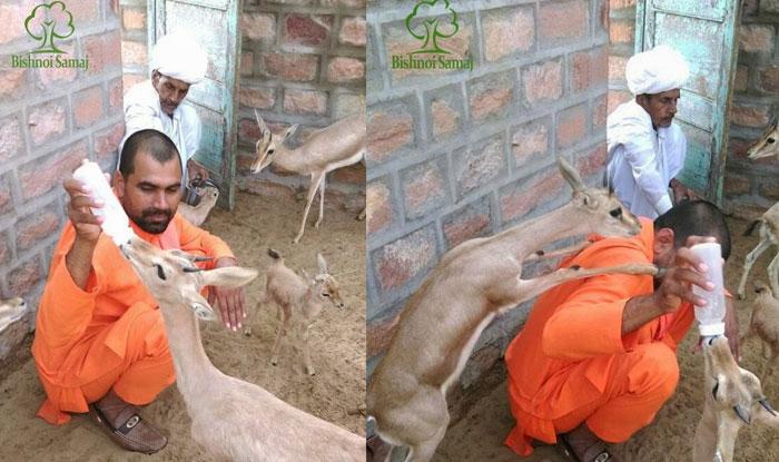 सलमान खान को जिस विश्नोई समाज ने कोर्ट में घसीटा, वह पशु की रक्षा के लिए जान भी दे देता है