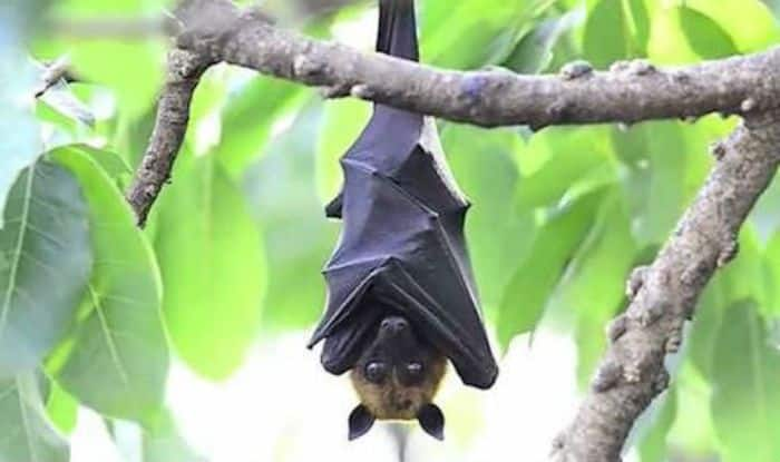Henipavirus and Nipah Virus in India: What Causes this disease and Everything you need to know