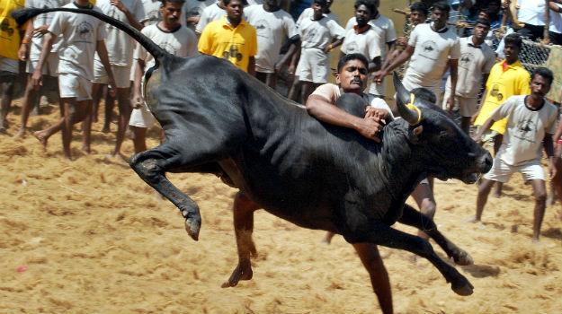 Russian President Vladimir Putin Not Visiting Tamil Nadu to Watch Jallikattu: Report