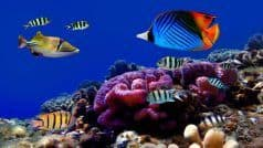 Watch Video: Join these scuba divers as they observe the exquisite marine life of the Andaman & Nicobar Islands