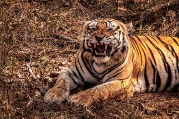 How to Reach Kanha Tiger Reserve in Madhya Pradesh By Road, Train and Flight