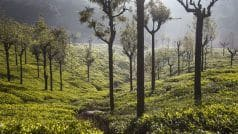 These Coonoor Images Will Sweep You Off Your Feet And Make You Dream of a Vacation