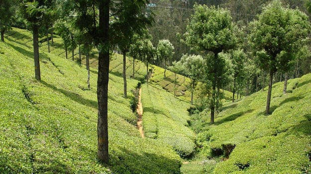 Chennai to Coonoor: How to reach Coonoor from Chennai by road