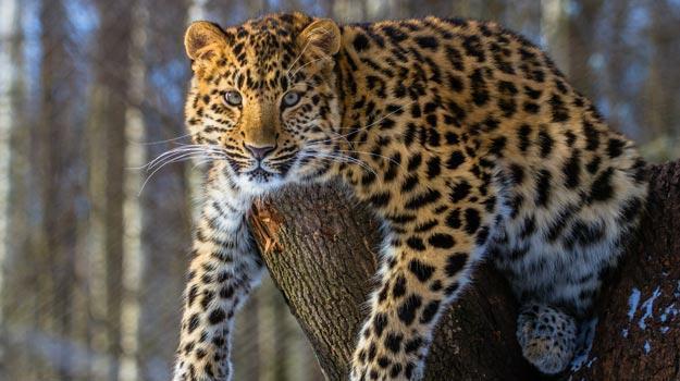 How to reach Dachigam National Park