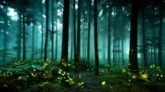 Mysterious Fireflies And Where You Can Find Them in Maharashtra