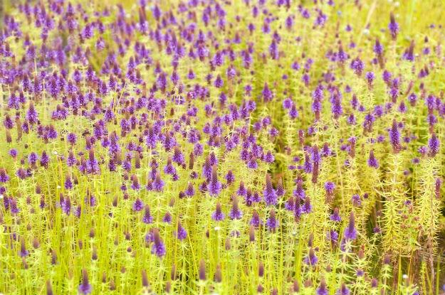 How to reach Kaas plateau, Maharashtra's Valley of Flowers near Satara